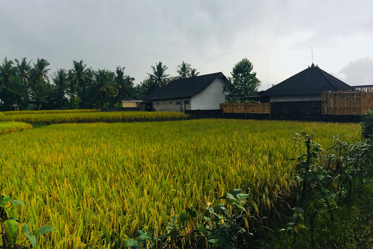 Escenarios de Crecimiento Urbano para Indonesia